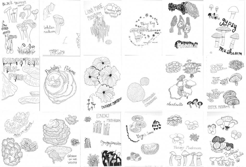 Collection of images of my mushroom sketches